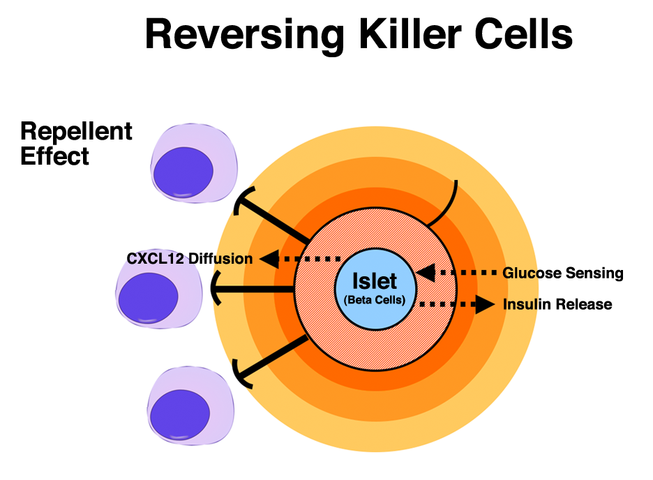 Putting Killer Cells In Reverse The Hidden Power Of Cxcl12
