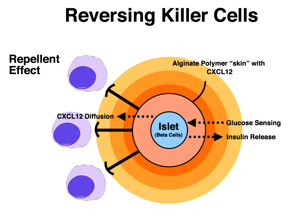 Immune System Diagram For KidsImmune System Diagram For Kids