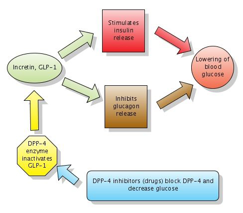 insulin and glucose relationship diagram software