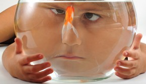 shutterstock_18802462_girl_with_goldfish_620px